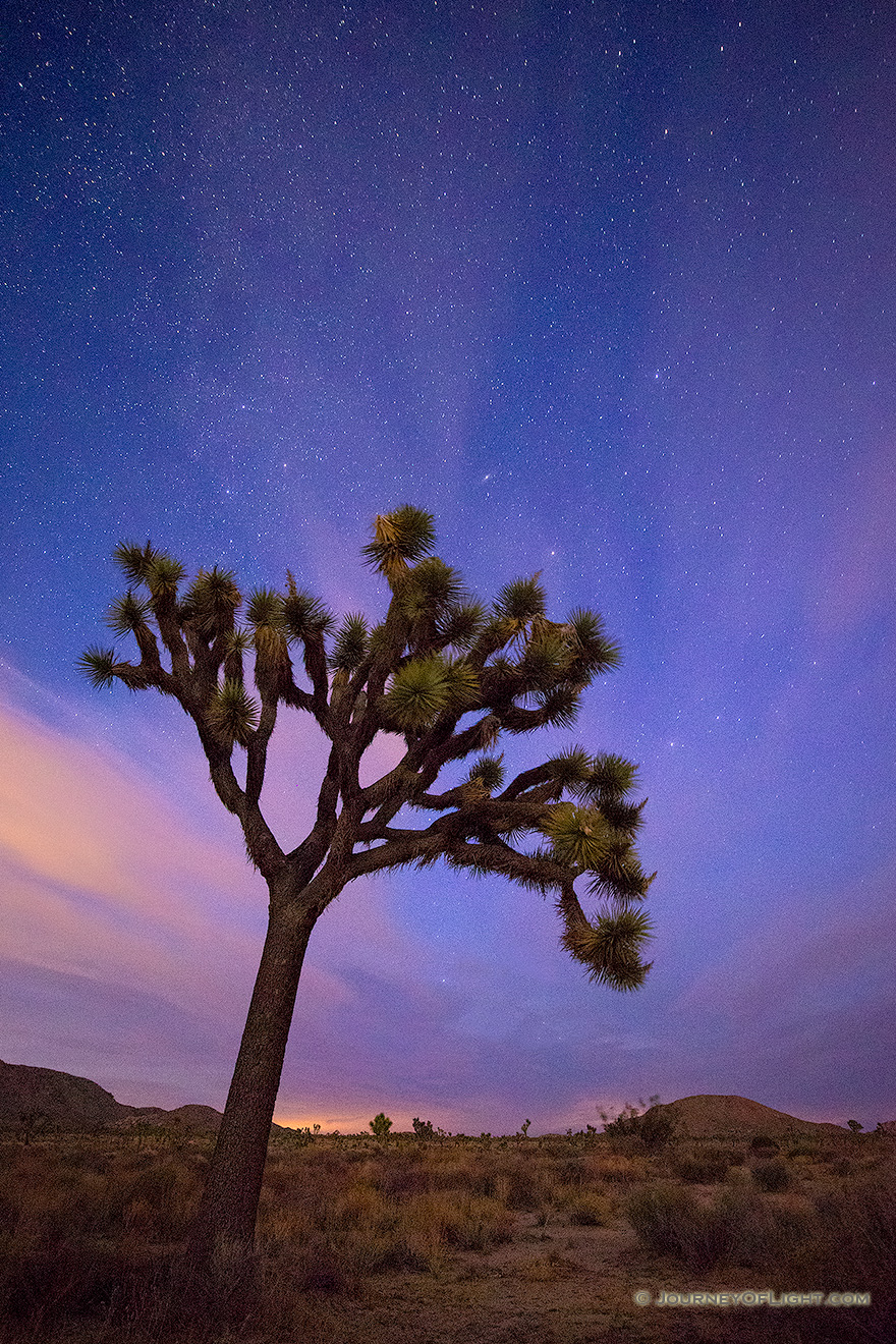 After a beautiful sunset in Joshua Tree National Park, the stars shine bright above the dark landscape. - State of California Picture