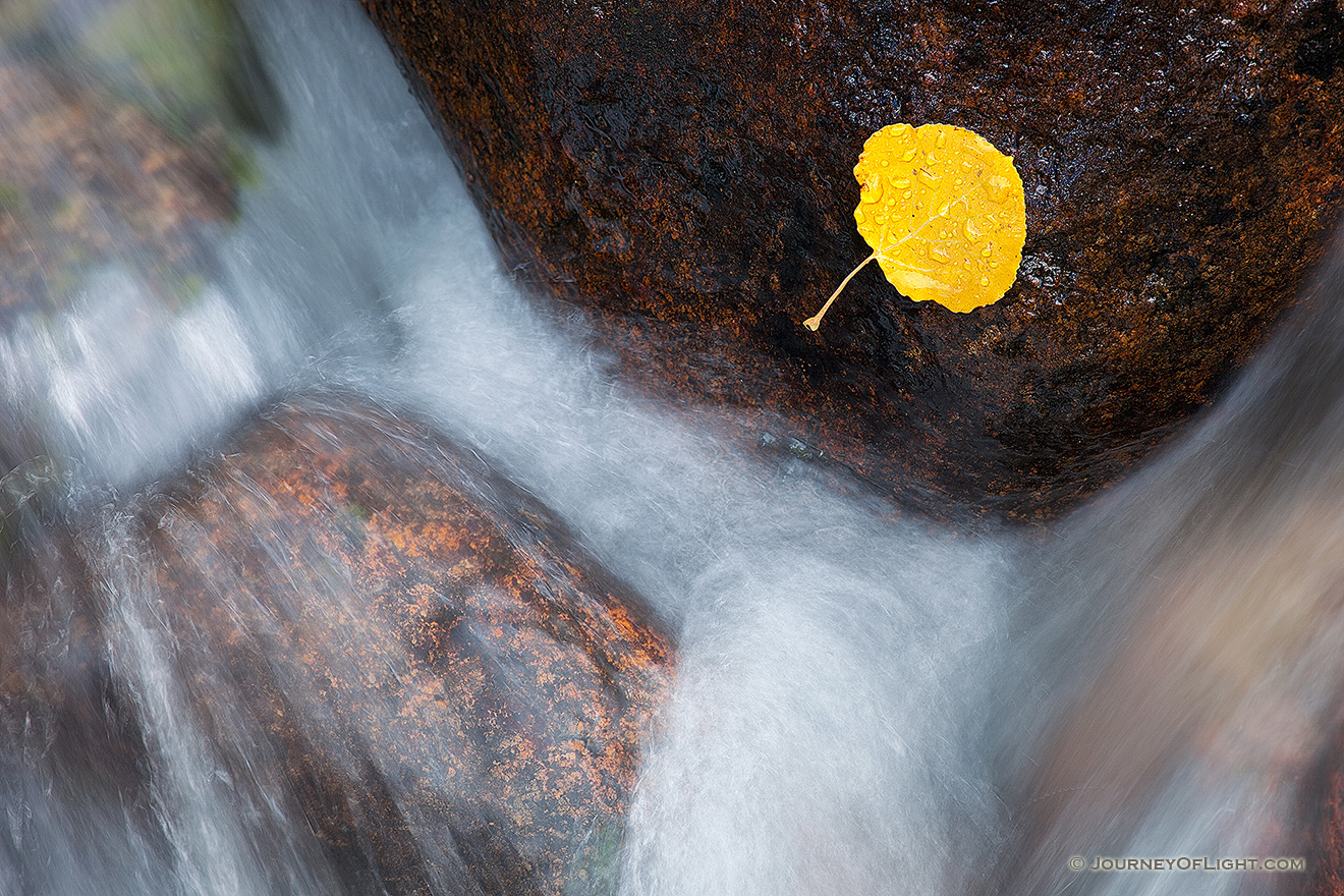 A lone fallen autumn aspen leaf grasps to a rock as the Big Thompson cascades by. - Colorado Picture