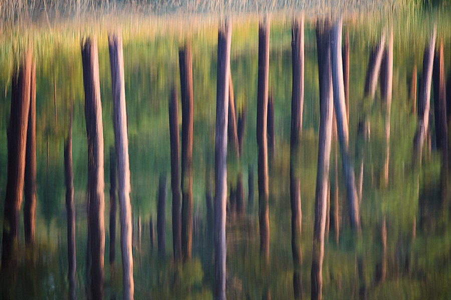 An abstract nature image of trees reflected in Stockade Lake in Custer State Park in the Black Hills. - South Dakota Photography