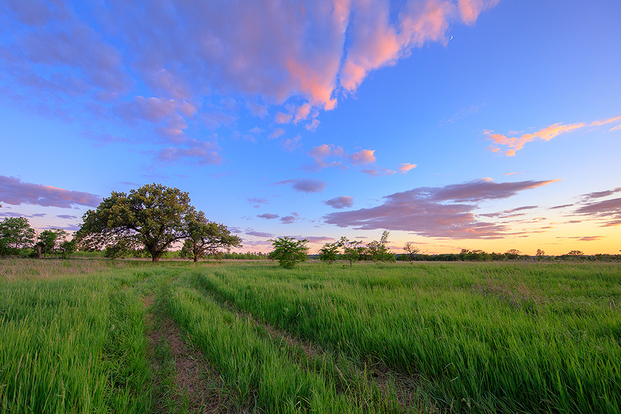At the end of a country road on a priarie two Oak Trees stand greeting the twilight. - Platte River SP Photography