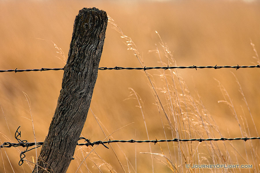 A barbed wire fence is surrounded by prairie grass in Hall County just south of Grand Island, Nebraska. - Nebraska Photography