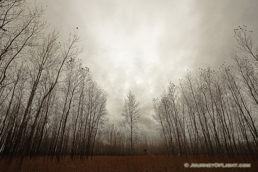 Trees stand at Boyer Chute National Wildlife Refuge on a melancholy winter evening. - Boyer Chute NWR Photography