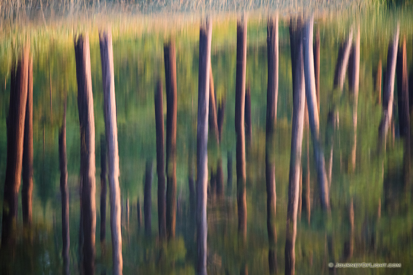 An abstract nature image of trees reflected in Stockade Lake in Custer State Park in the Black Hills. - South Dakota Picture
