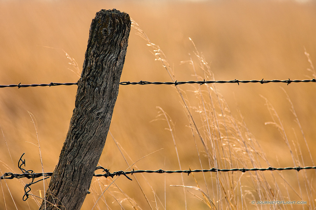 A barbed wire fence is surrounded by prairie grass in Hall County just south of Grand Island, Nebraska. - Nebraska Picture