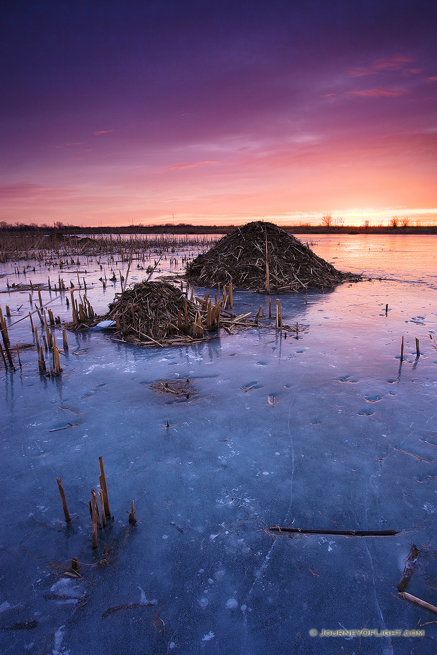 On a chilly morning I photographed several beaver huts nestled throughout Nathan's Lake at Boyer Chute National Wildlife Refuge. - Boyer Chute Picture