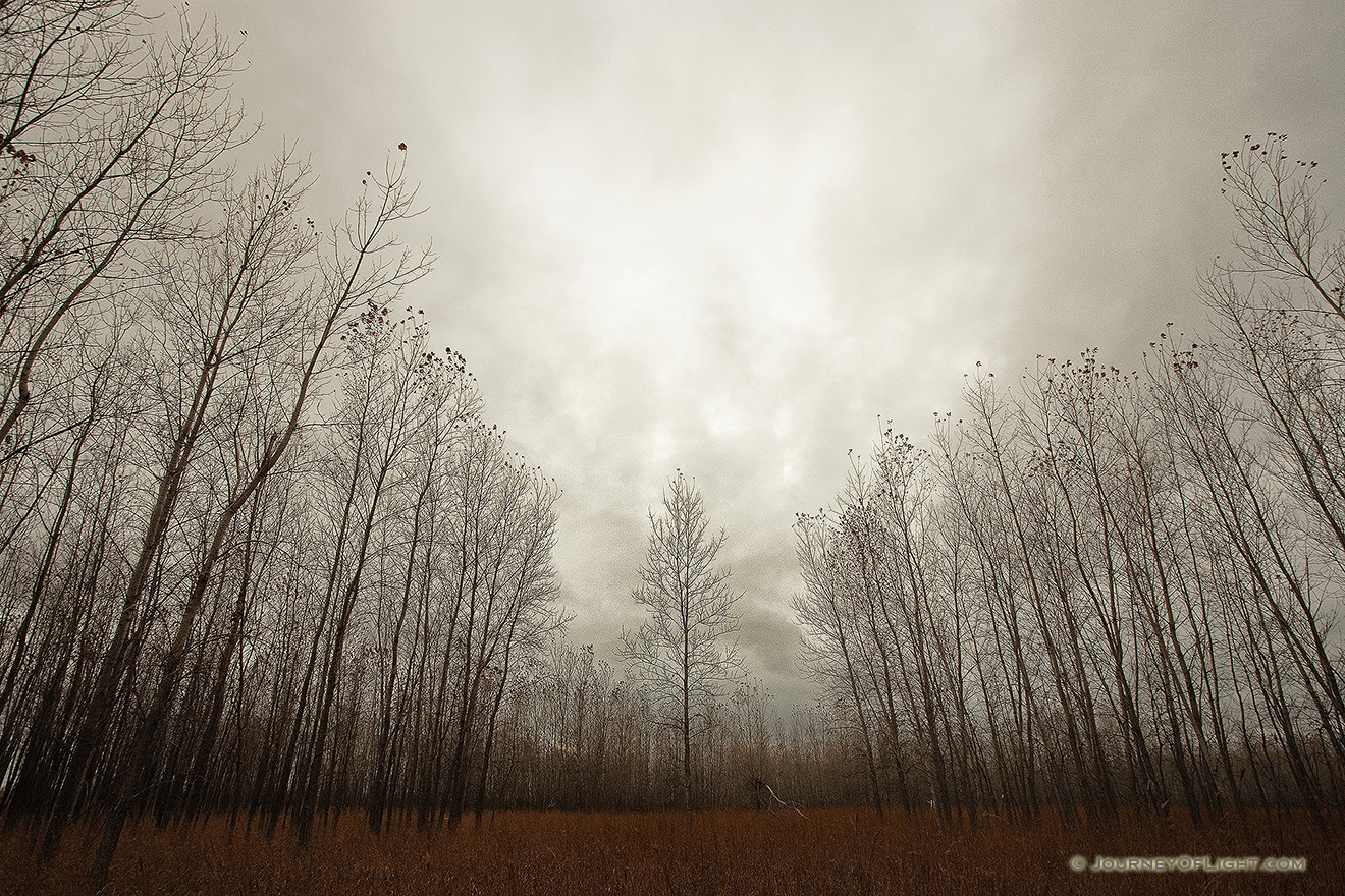 Trees stand at Boyer Chute National Wildlife Refuge on a melancholy winter evening. - Boyer Chute NWR Picture